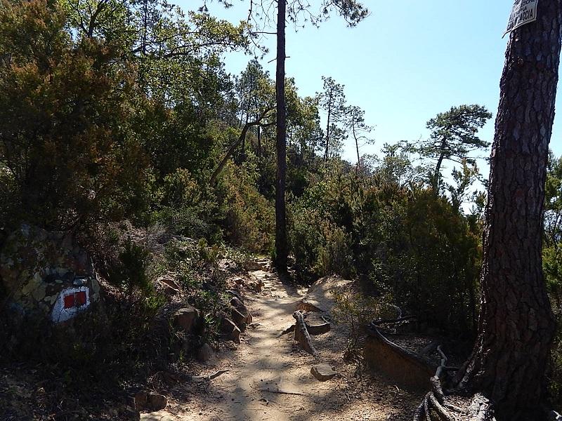 Il sentiero prosegue sempre più immerso nella vegetazione