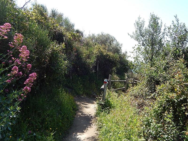 Il primo tratto pianeggiante del sentiero di Punta Manara