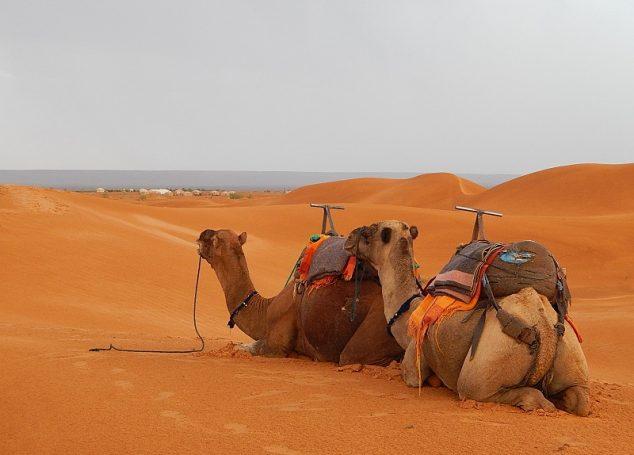 Itinerario di viaggio: on the road in Marocco (pt 1)