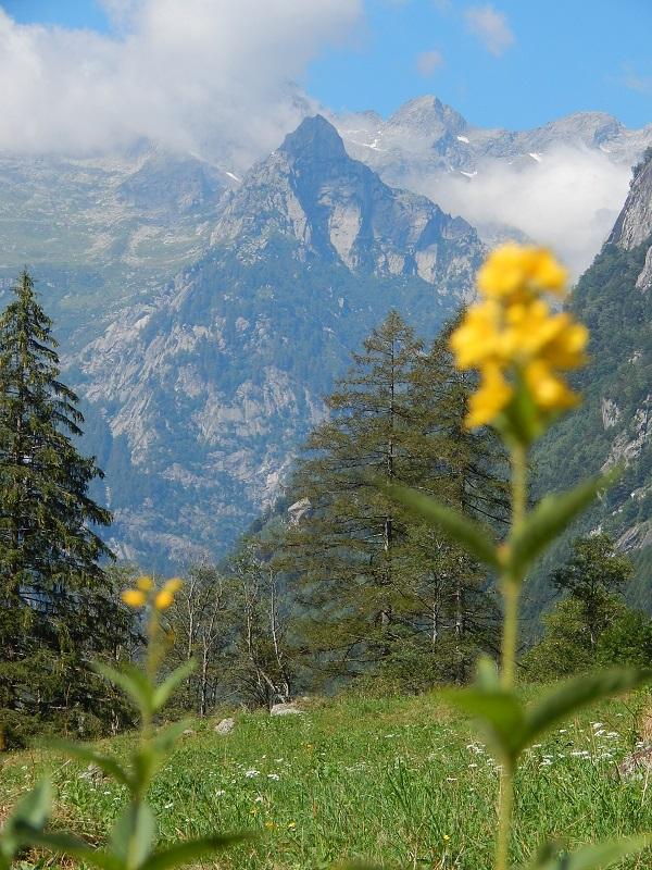prati verdi e montagne imponenti