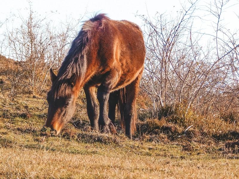 i cavalli selvaggi della val d'aveto