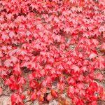 Foliage in Liguria: itinerari che si vestono di mille sfumature
