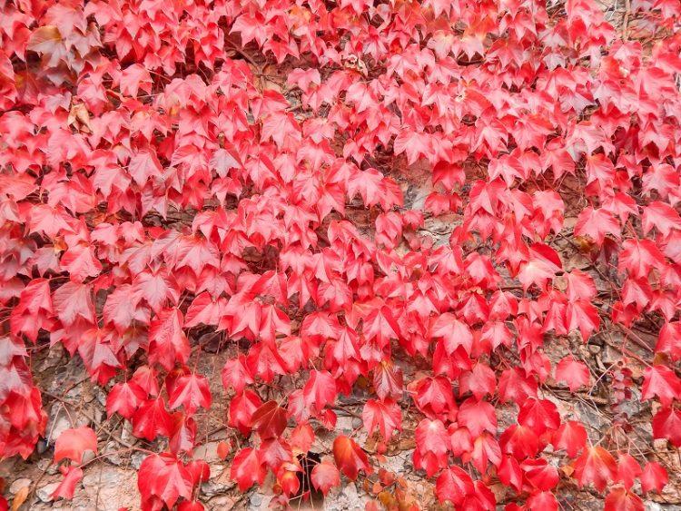 foliage in liguria