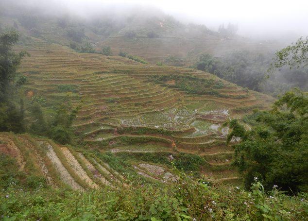 Trekking a Sapa: immersi nelle risaie lontano dalla città